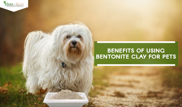 bentonite clay for pets